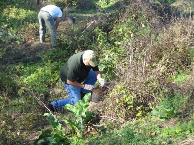 Volunteers planting trees near St. Louis, Missouri. Flickr/Creative Commons photo by  USFWSmidwest.
