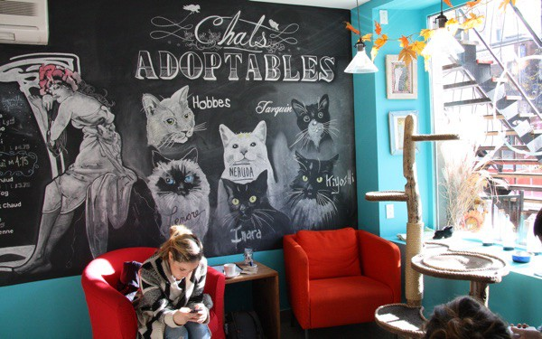 "Café Venosa is one of two ""cat cafés"" in Montreal's Plateau neighbourhood. Photo copyright Laura Byrne Paquet."