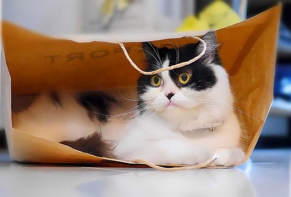 And after you come home from shopping, you can use the empty bags as cat toys. Flickr/Creative Commons photo by Travel Oriented.