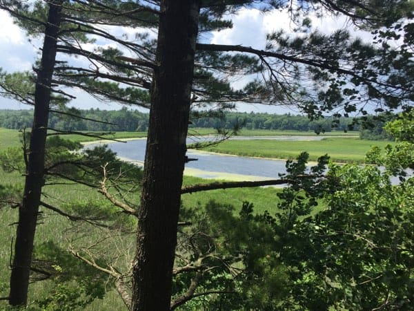 Here's what Jones Creek Marsh looks like from the platform at the end of the seventh zip line. Photo by Laura Byrne Paquet.