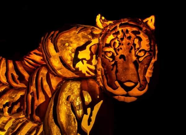 Tiger made of artificial pumpkins at Pumpkinferno at Upper Canada Village in Morrisburg, Ontario.
