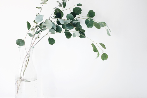 Delicate stems with green leaves in a glass vase. Photo by Jazmin Quaynor on Unsplash.